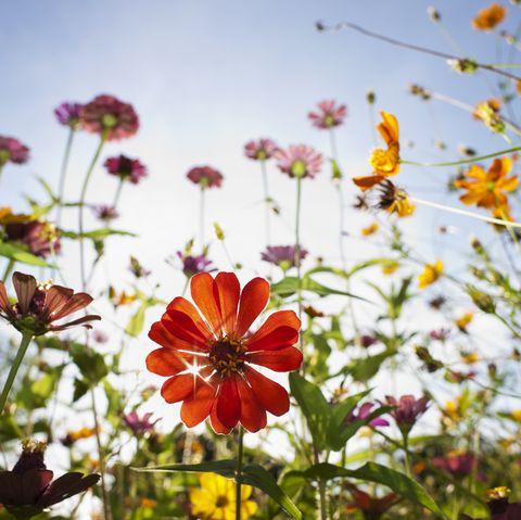 Beautiful wild flowers in a meadow.