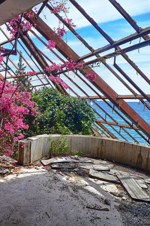 Beauty flower in winter Garden The interior old ruined hotel in abandoned Yugoslavian military resort with a view of Adriatic sea in Kupari, Croatia