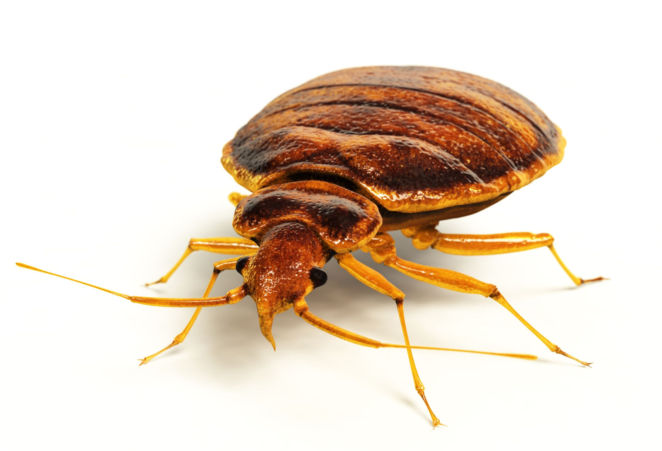 Surprisingly, Bed Bugs Are As Old As Dinosaurs