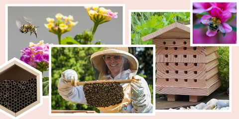 best bee houses 2018