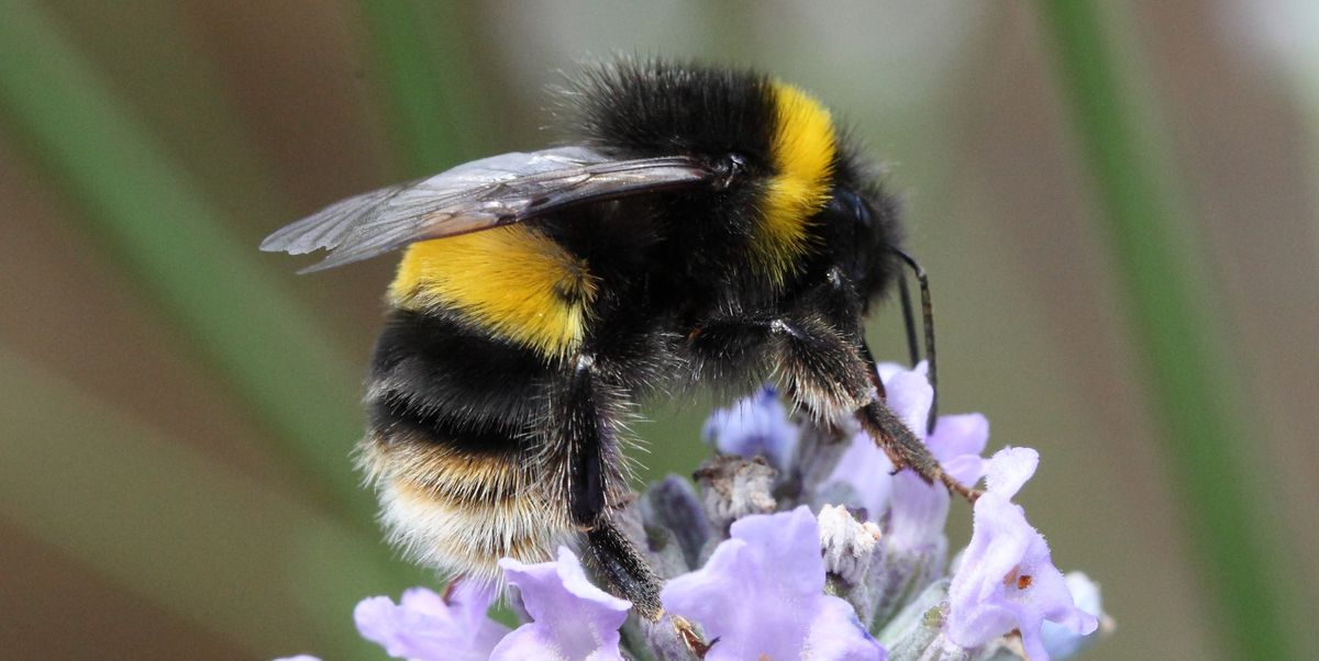 Bee stings and wasp stings: treatment tips