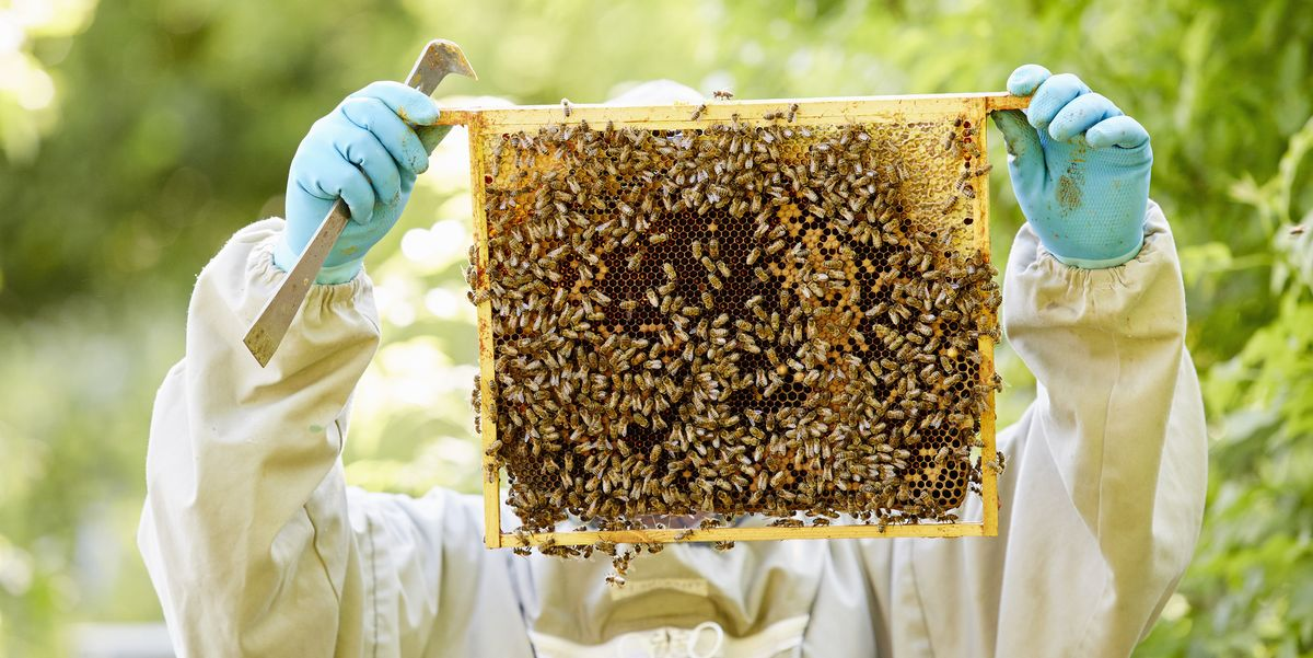 Beekeeping for Beginners — Beekeeping 101 for Your ...