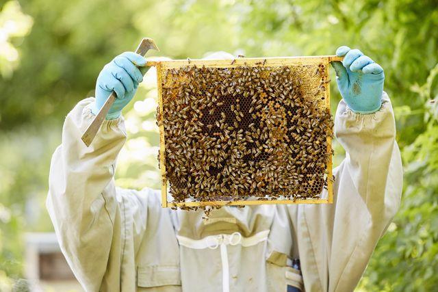 virtual beekeeping