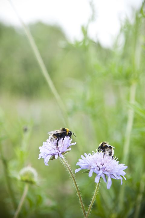 bees pollinating flowers in a meadow