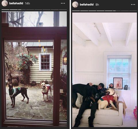 The Weeknd dan Bella Hadid juga menghabiskan waktu Natal bersama anjing mereka (dok. Elle)