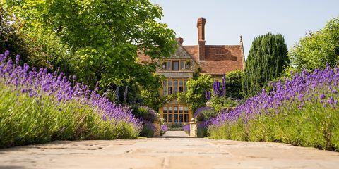 Lavender, Flower, English lavender, Plant, Lavender, Garden, Purple, Spring, Botany, Shrub,