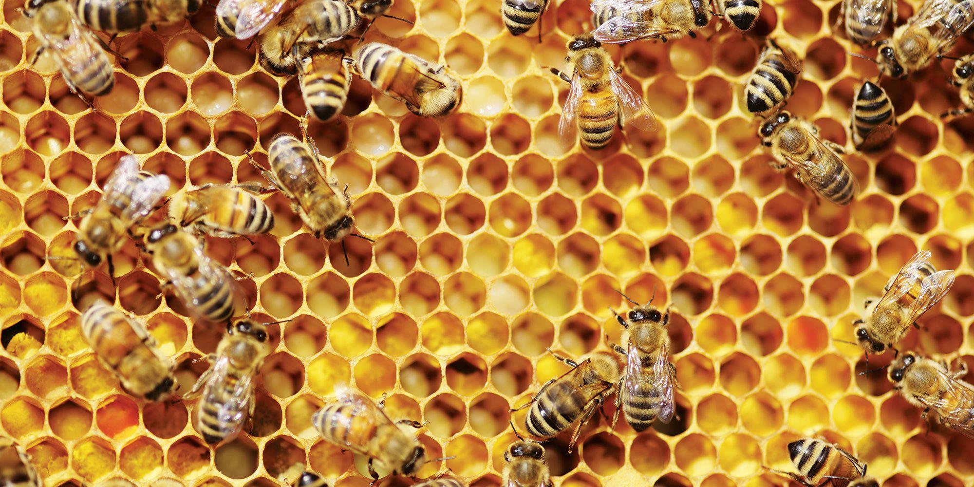 bees climbing honey comb