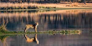 Safari holidays - India tiger watching holiday