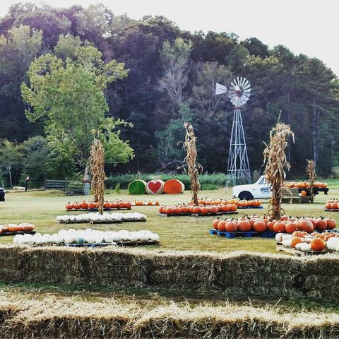 Bennett Farms Pumpkin Patch