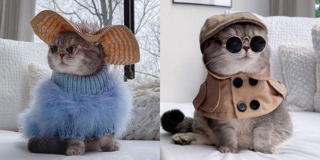 今、instagram上で大人気の猫と言えば、アメリカ在住のベンソン! 元々は路上で保護された猫で、その性格とセレブ顔負けのファッショナブルな衣装で一気にsnsスターに。ベンソンの特徴は、テーマに合わせたワードローブを着用しているところ。季節を感じられるベンソンのファッションとその写真は、笑顔になること間違いなし!