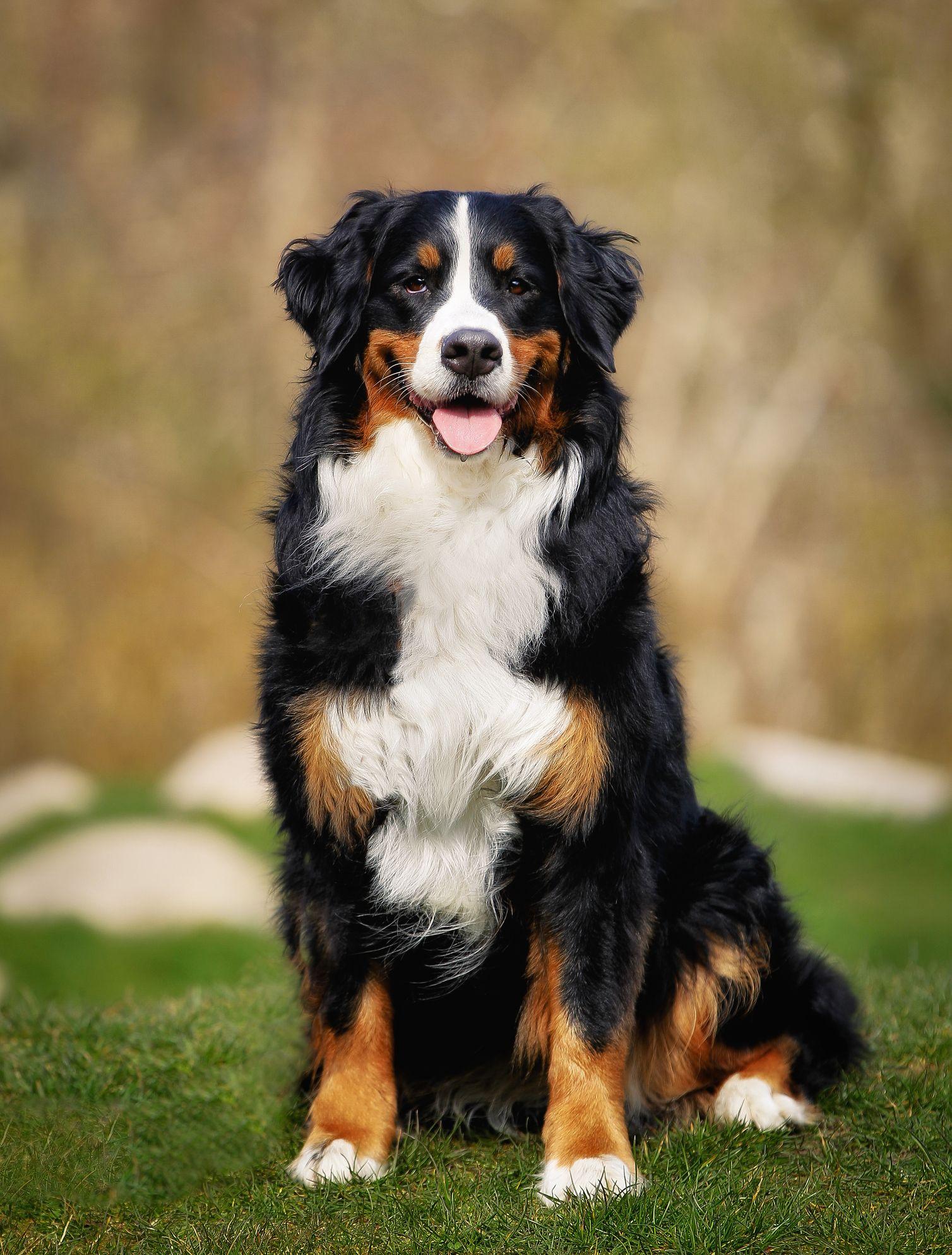 20 Best Dog Breeds For Kids Good Family Dogs