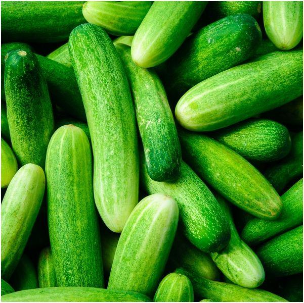 小黃瓜,減肥