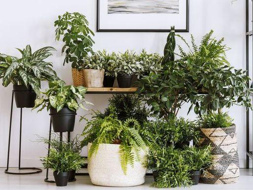 best aesthetic plants