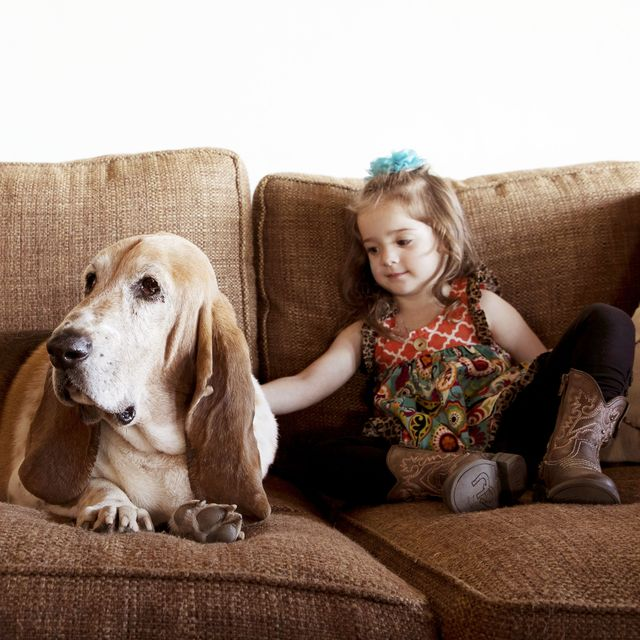 best air purifiers for pets walter in pawhuska