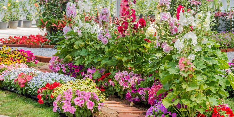 15 best annual flowers annual flowers list for Garden designs for small square gardens