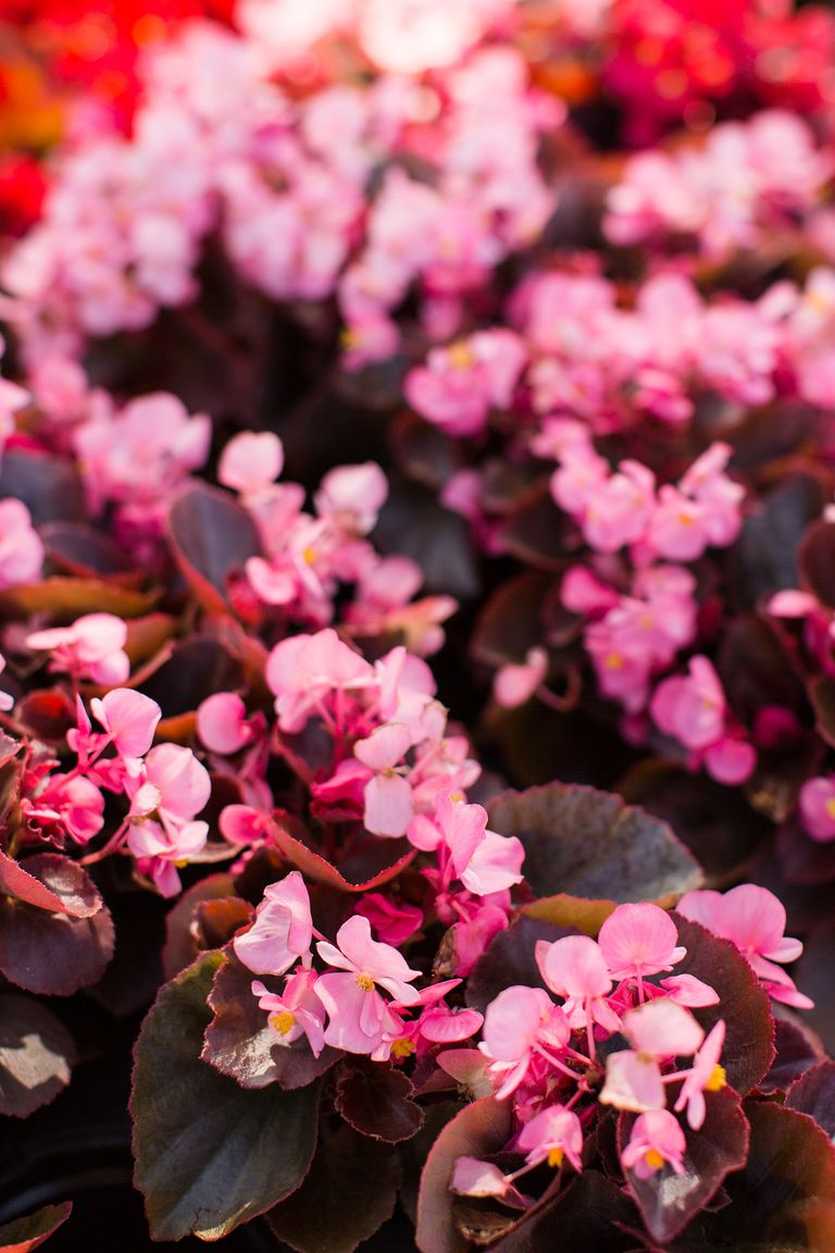 The 15 best annual flowers you need to plant in your yard all these dainty flowers which bloom in shades of white pink and red require very little maintenance and upkeep no deadheading or pruning required izmirmasajfo