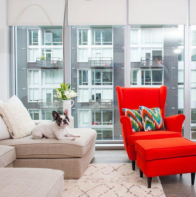 best-apartment-dog-breeds