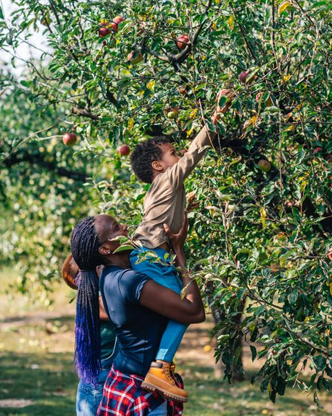 african woman and her son picking up apples in orchard in autumn