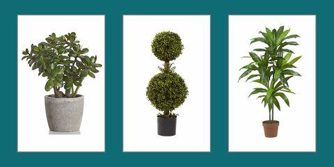 Flowerpot, Plant, Houseplant, Tree, Flower, Woody plant, Terrestrial plant, Grass, Shrub, Flowering plant,