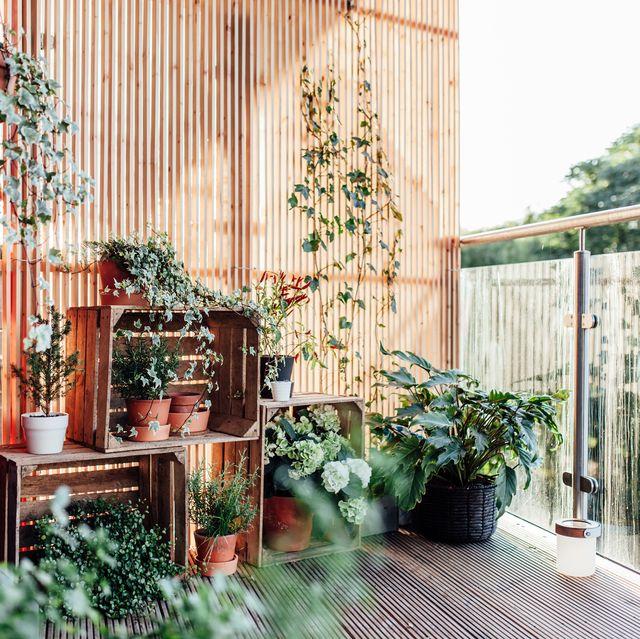 15 Best Balcony Plants - Apartment Balcony Plant Ideas