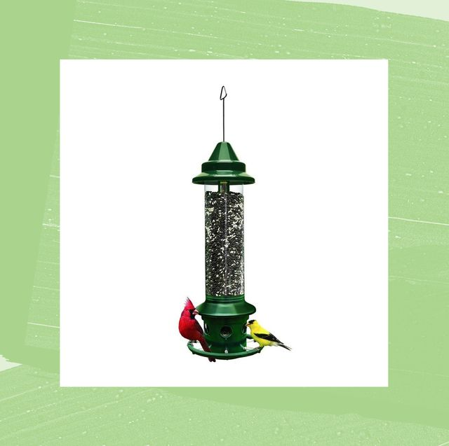 best bird feeder