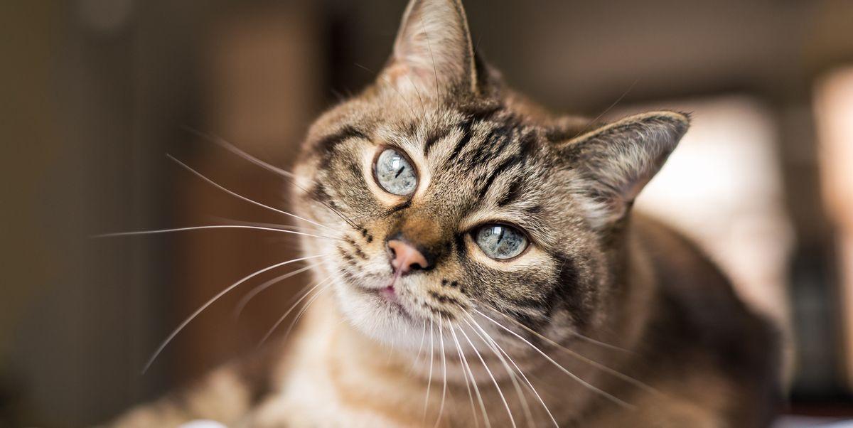 100 имен кошачьих мальчиков, которые выбирают в помете