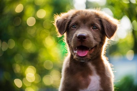 100 Best Boy Dog Names Cute And Unique Male Puppy Name Ideas