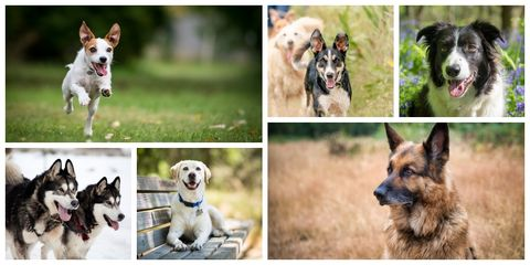 Best breed of dogs to run with