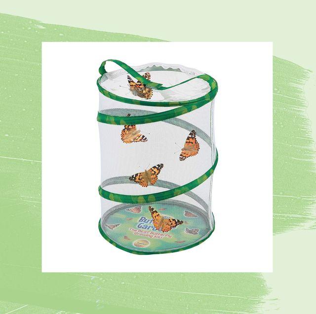 best butterfly kits