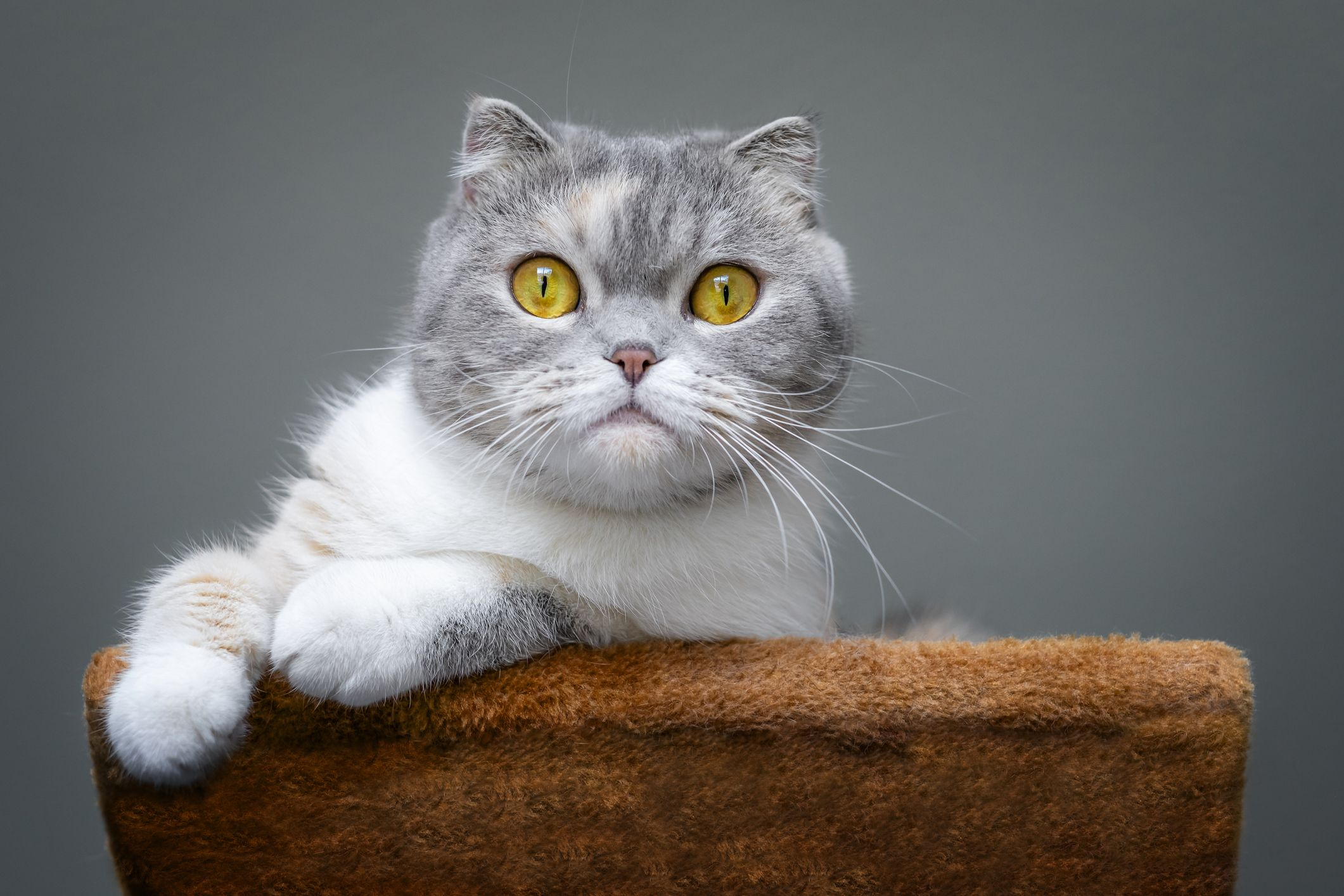 The 14 Best Cat Breeds You Could Own