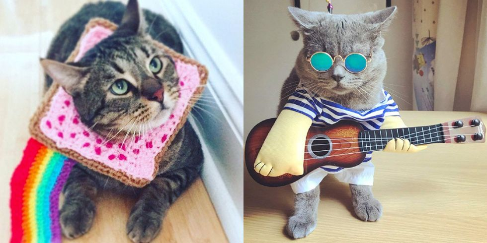 The 20 Best Cat Halloween Costumes to Help Your #1 Feline Score All the Treats