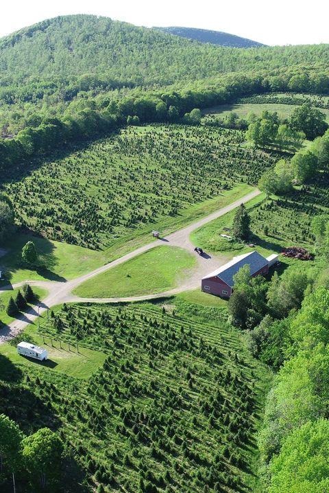 Piper Mountain Christmas Tree Farm