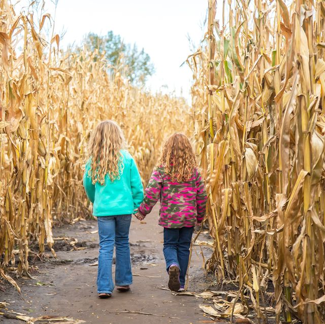 35 Best Corn Mazes Near Me Best Haunted And Family