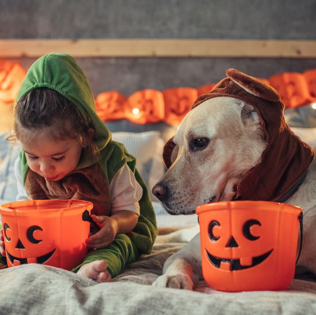 25 Best Dog And Owner Costumes Matching Dog And Owner