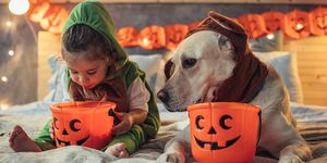 best costumes with dog - halloween costumes with dog