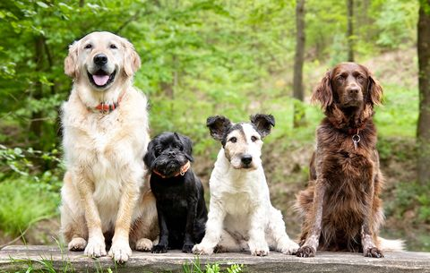The Best Dog Breeds For Every Lifestyle