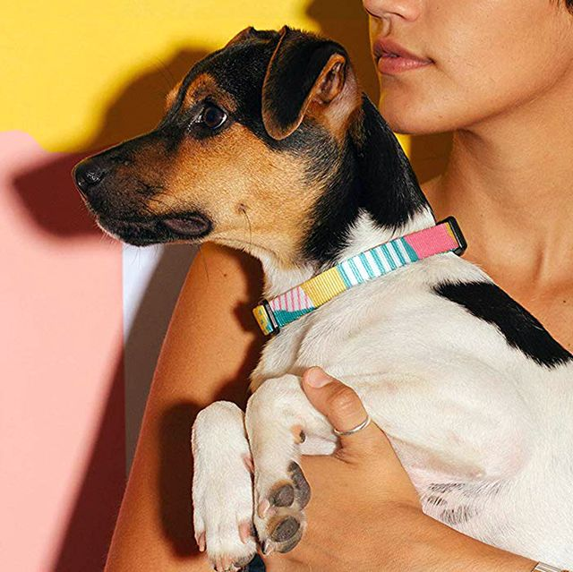 best dog collars 2020