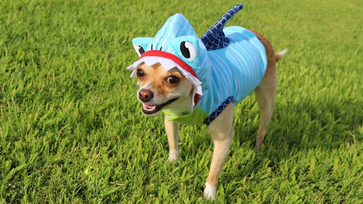 30 Best Dog Costumes for Halloween 2019 - Dog Costume Ideas