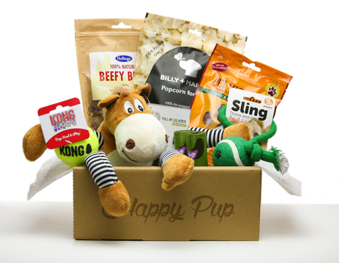 Round-up of the best dog subscription boxes to buy