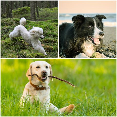 best dogs for anxiety
