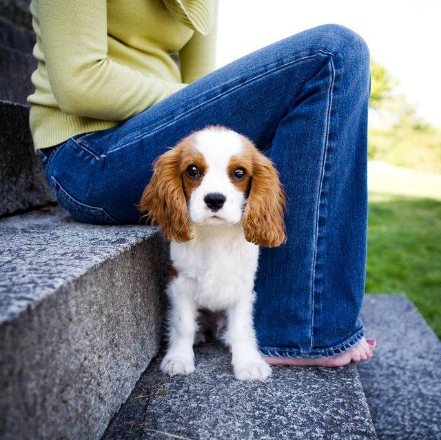 The Best Dogs For Seniors Dog Breeds For Older People