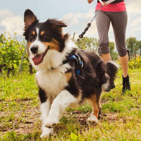 running with dogs runner s world