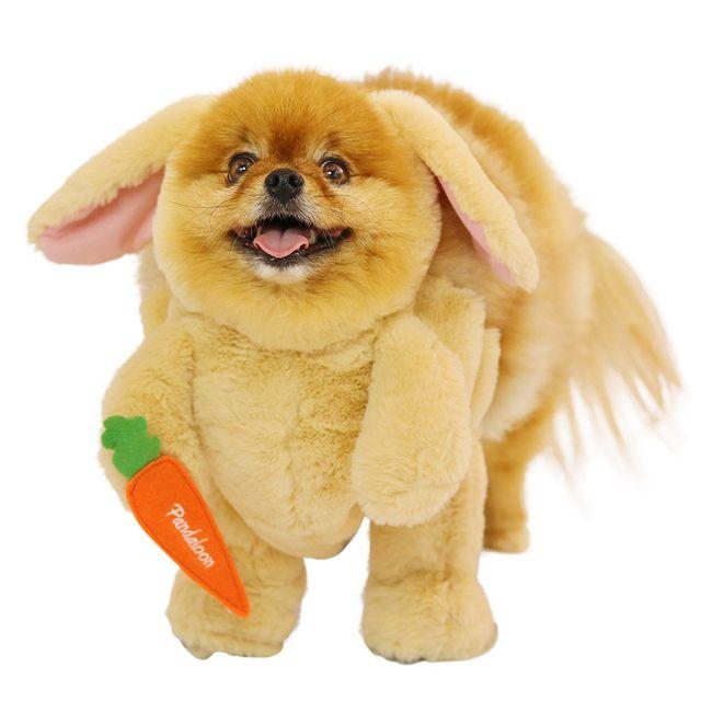Best Easter gifts -- Pandaloon walking rabbit dog costume
