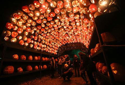 new york, united states   october 28 visitors are seen inside a tunnel made of pumpkins at the great jack olantern blaze spectacle which features more than 5,000 hand carved, illuminated pumpkins created by professional artists during halloween season in croton on hudson village of new york city, united states on october 28, 2014 photo by cem ozdelanadolu agencygetty images