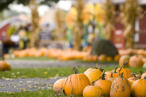 best fall festivals coconut grove pumpkin patch festival