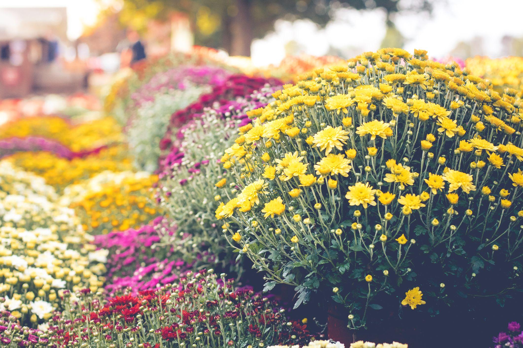 25 fall flowers to plant - pretty fall flowering perennials & plants