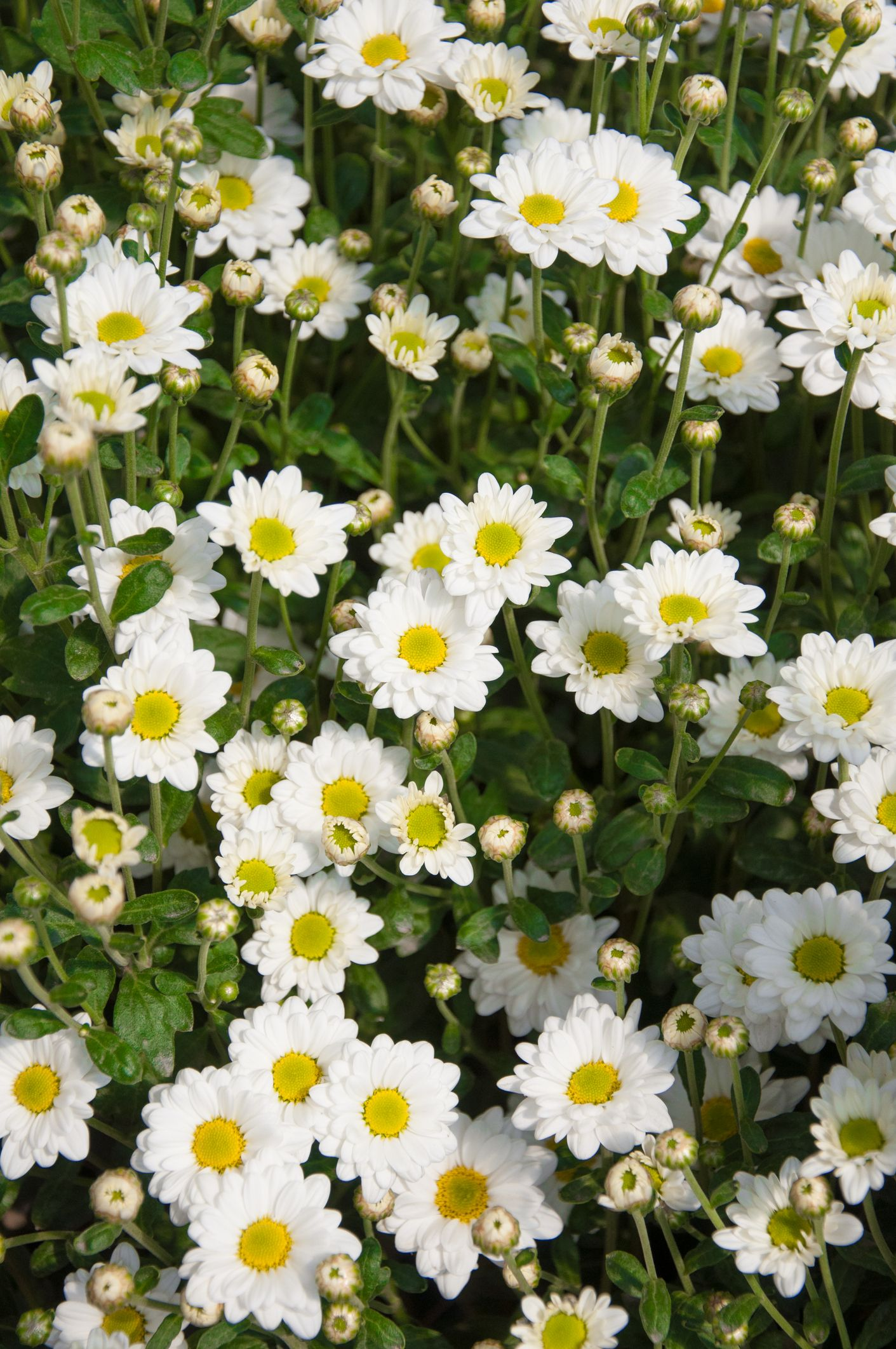 25 Best Fall Flowers To Plant Pretty Plants