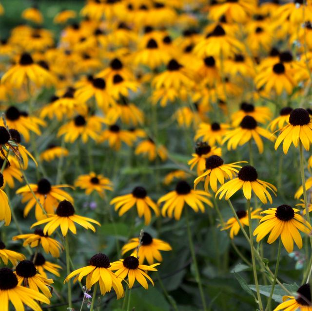 30 Best Fall Flowers To Plant Pretty Fall Plants Flowering Perennials
