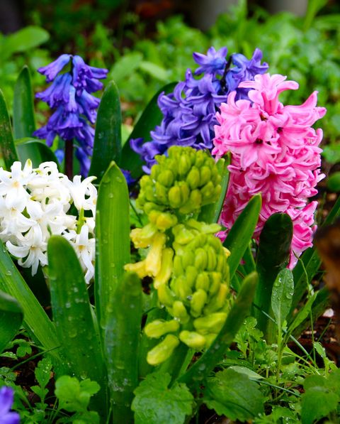 a garden filled with green, pink, purple, and white hyacinth