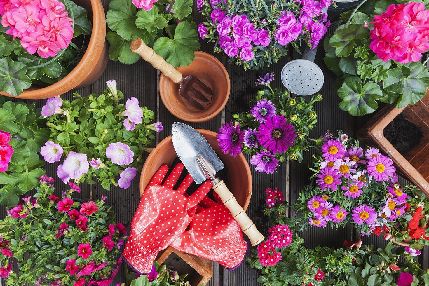 Amazonu0027s Best Garden Accessories